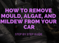 How to Remove Mould, Algae, and Mildew From Your Car